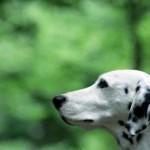 犬フロントライン