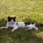 猫のフィラリア予防方法