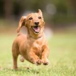 犬フィラリア予防