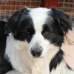 【悪臭の黒い耳あか!】犬の耳ダニの治療方法をご紹介