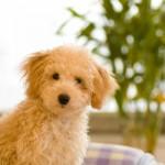 【最もかかりやすい病気!】犬の外耳炎の症状や治療方法