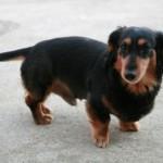 人間だけではない!犬の椎間板ヘルニアの症状や治療方法