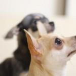 小型犬治療費