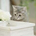 猫の口内炎について症状や治療方法などをご紹介