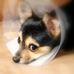 ペット保険病気
