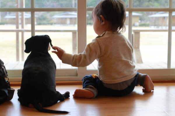 ペット保険必要性