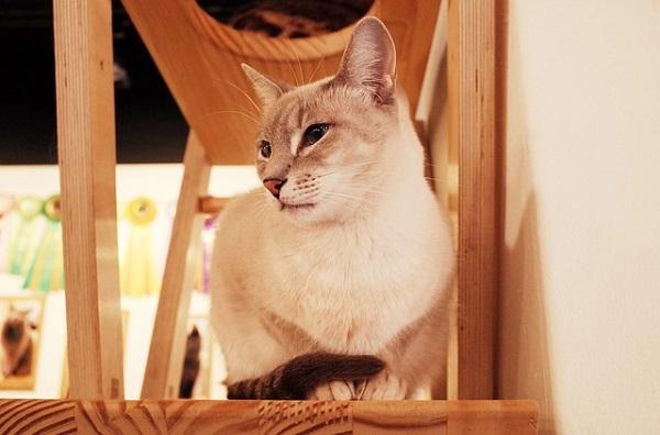 猫カフェ 埼玉