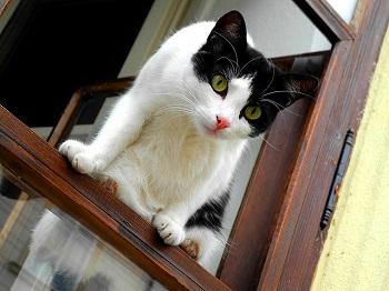 猫 外に出さない