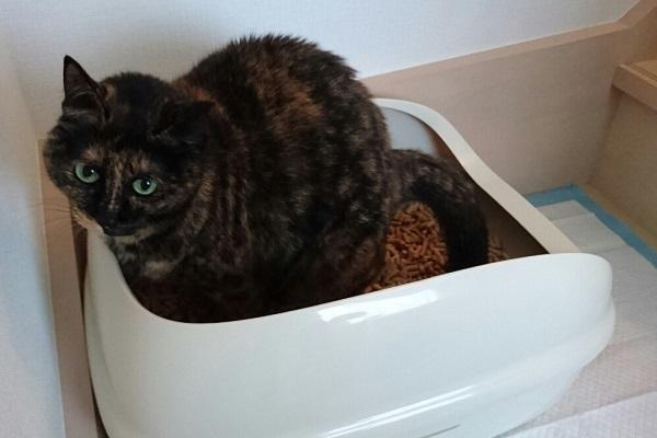 猫 システムトイレ