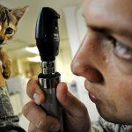 猫 健康診断